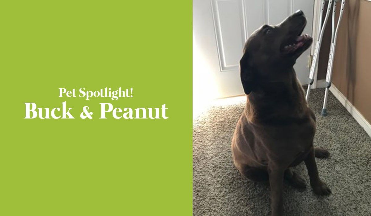 pet-spotlight-buck-peanut