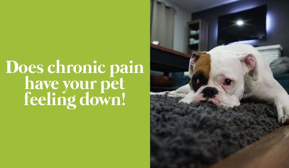 Does chronic pain have your pet feeling down!