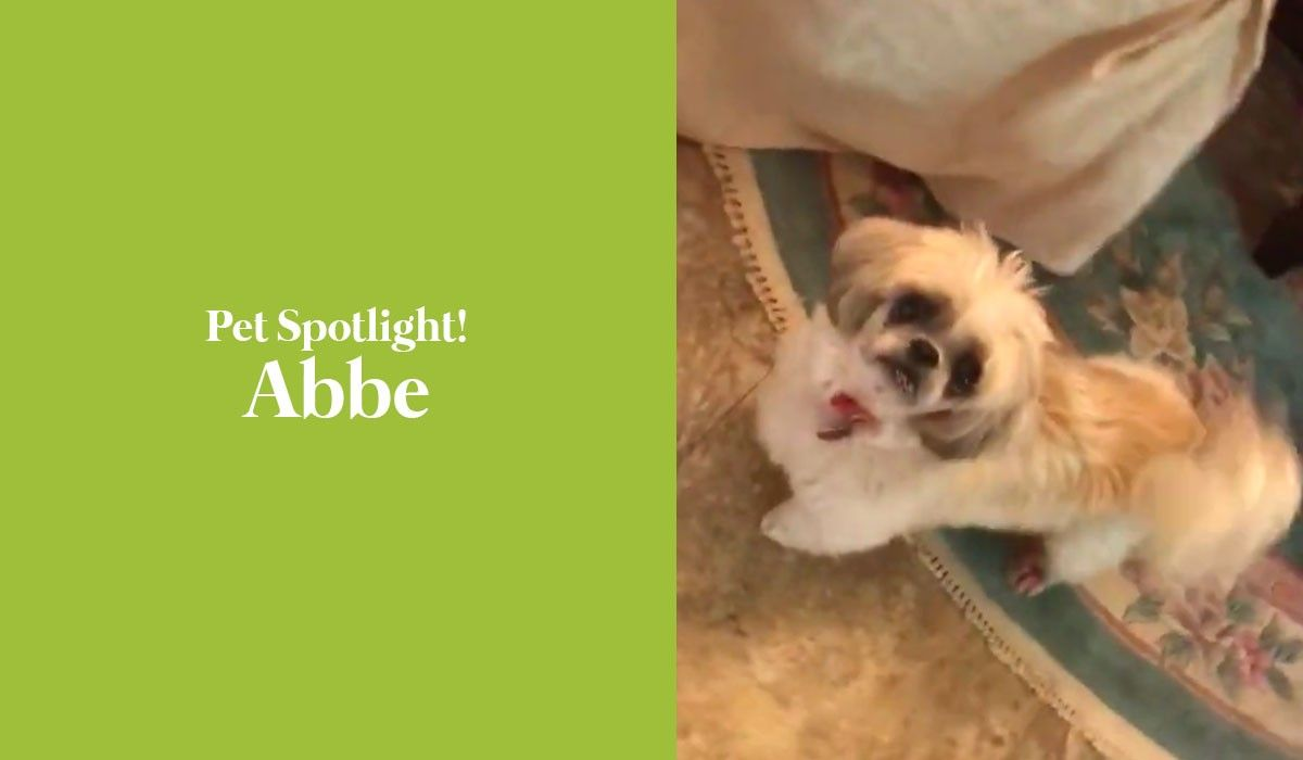 Pet Spotlight! Abbe