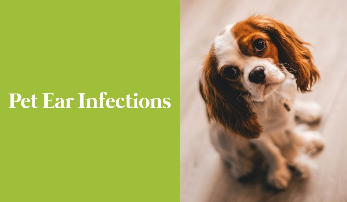 Pet Ear Infections