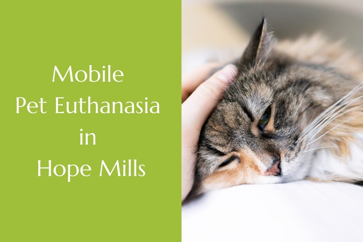 Mobile Pet Euthanasia in Hope Mills