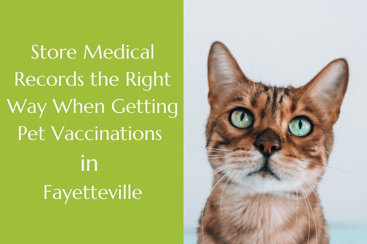 Store-Medical-Records-the-Right-Way-When-Getting-Pet-Vaccinations-in-Fayetteville--1