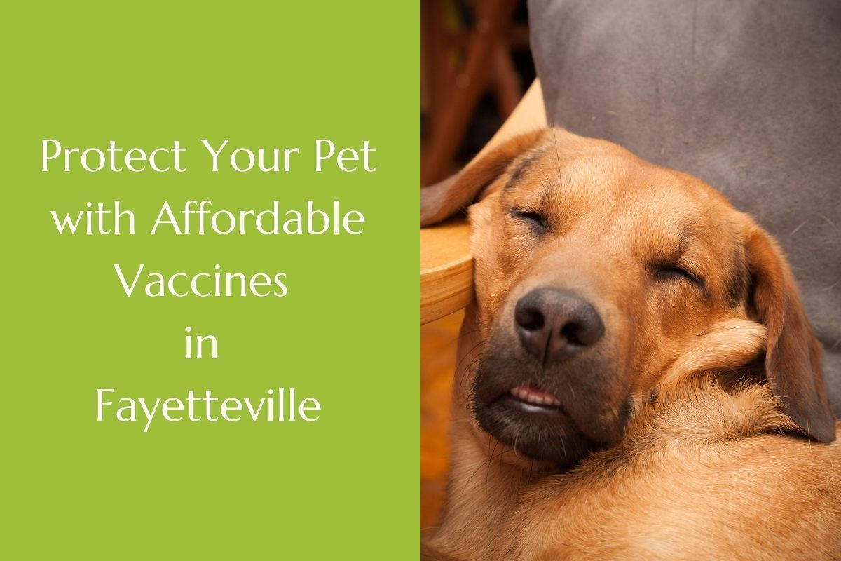 Protect-Your-Pet-with-Affordable-Vaccines-in-Fayetteville-