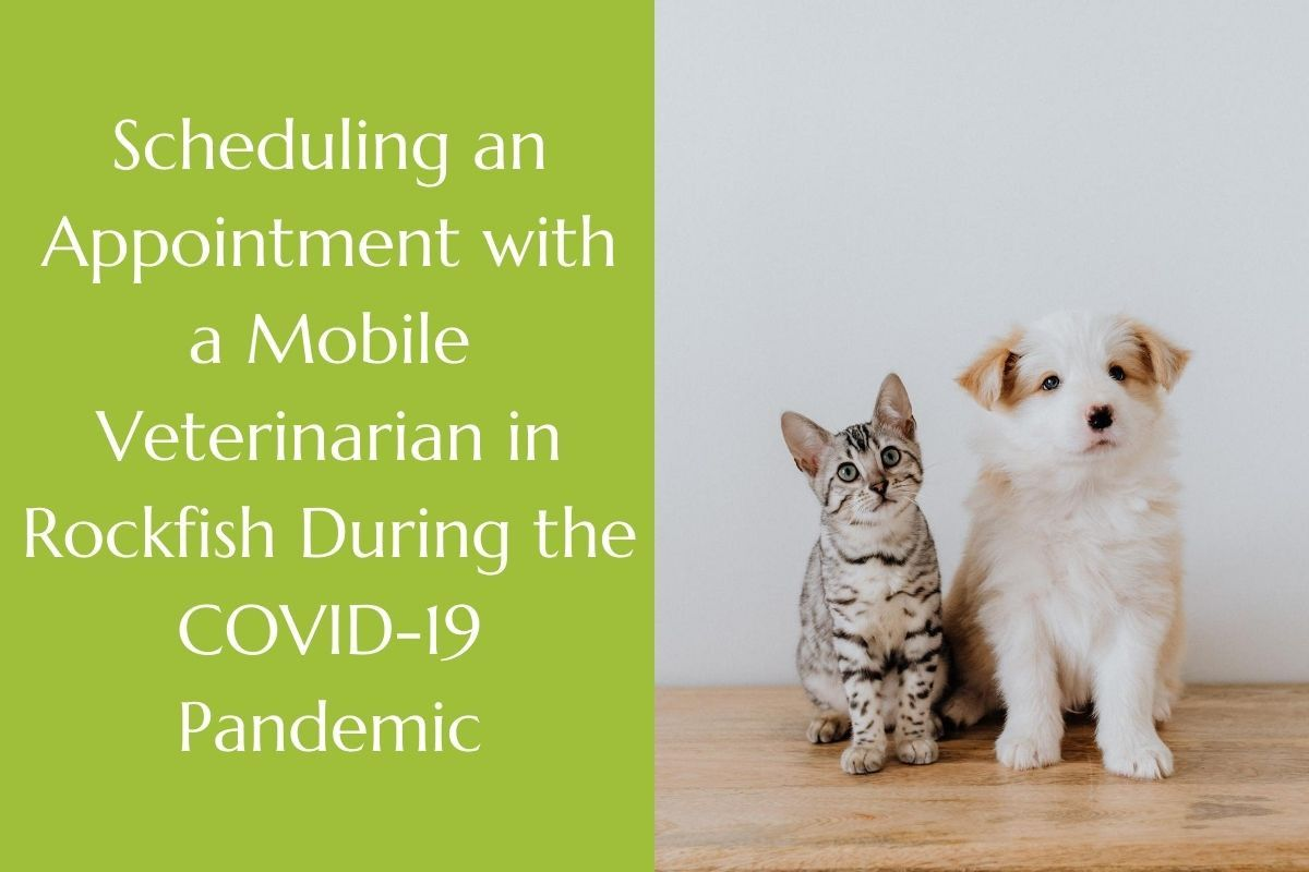 Scheduling-an-Appointment-with-a-Mobile-Veterinarian-in-Rockfish-During-the-COVID-19-Pandemic
