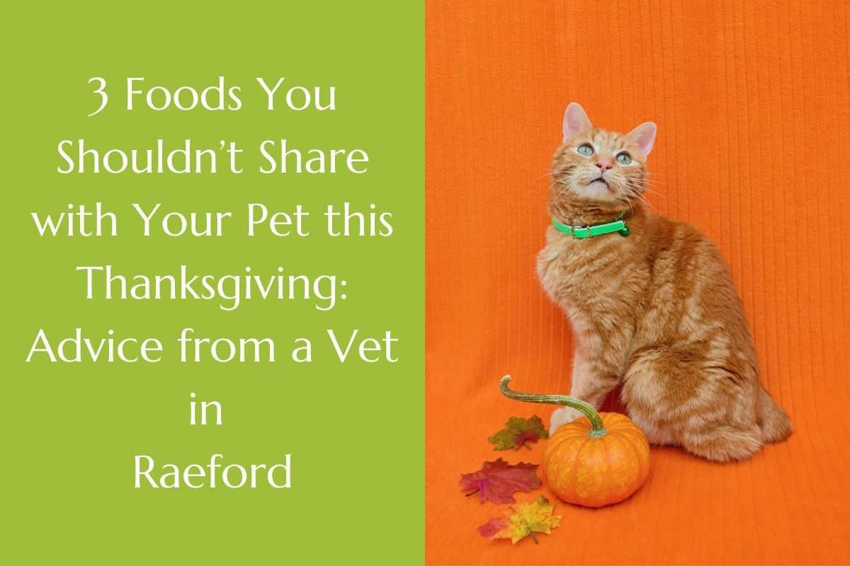 3-Foods-You-Shouldnt-Share-with-Your-Pet-this-Thanksgiving_-Advice-from-a-Vet-in-Raeford