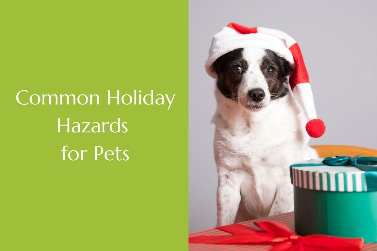 Common-Holiday-Hazards-for-Pets