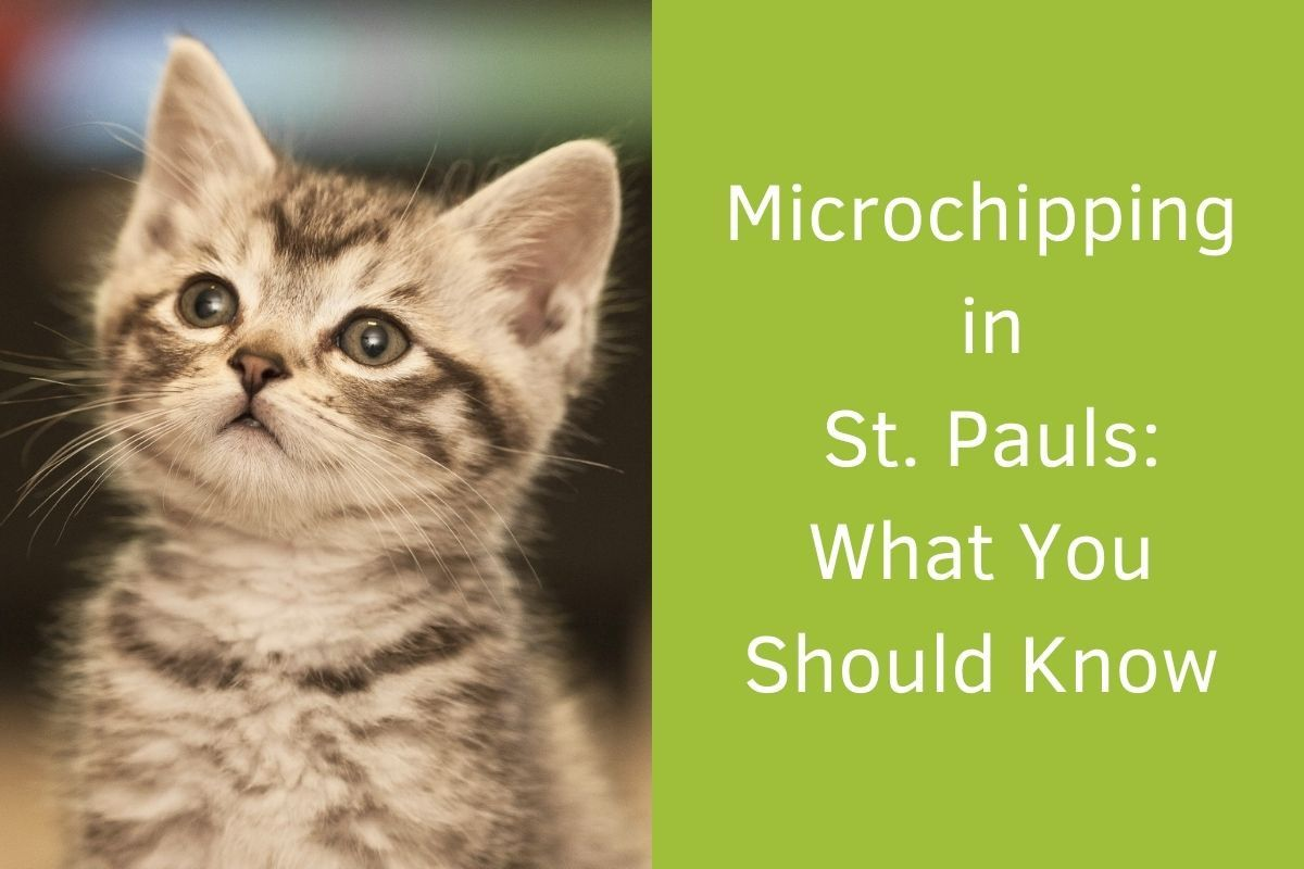 Microchipping-in-St.-Pauls_-What-You-Should-Know
