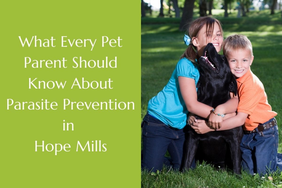 What-Every-Pet-Parent-Should-Know-About-Parasite-Prevention-in-Hope-Mills