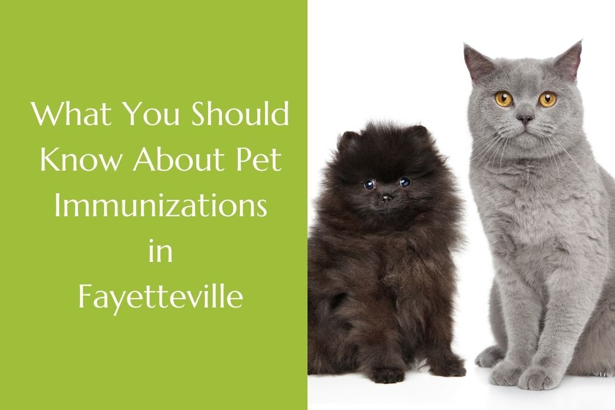 What-You-Should-Know-About-Pet-Immunizations-in-Fayetteville