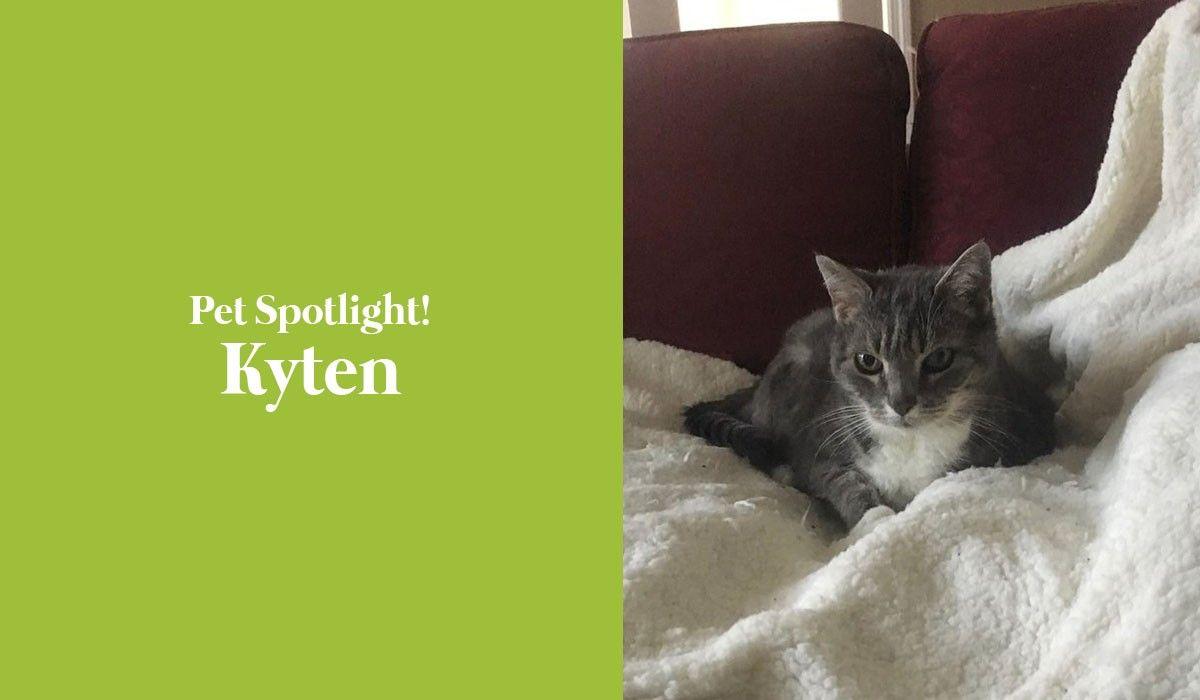 pet-spotlight-kyten