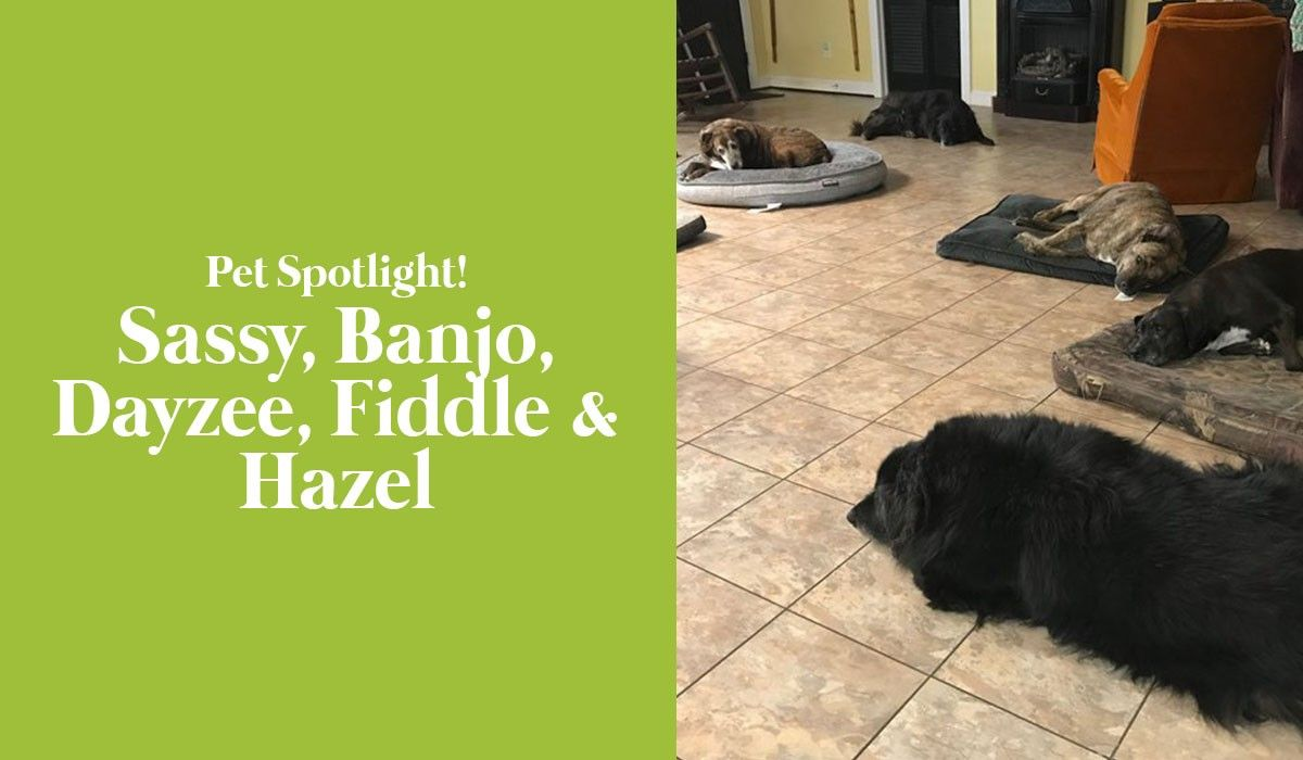 pet-spotlight-sassy-banjo-dayzee-fiddle-hazel