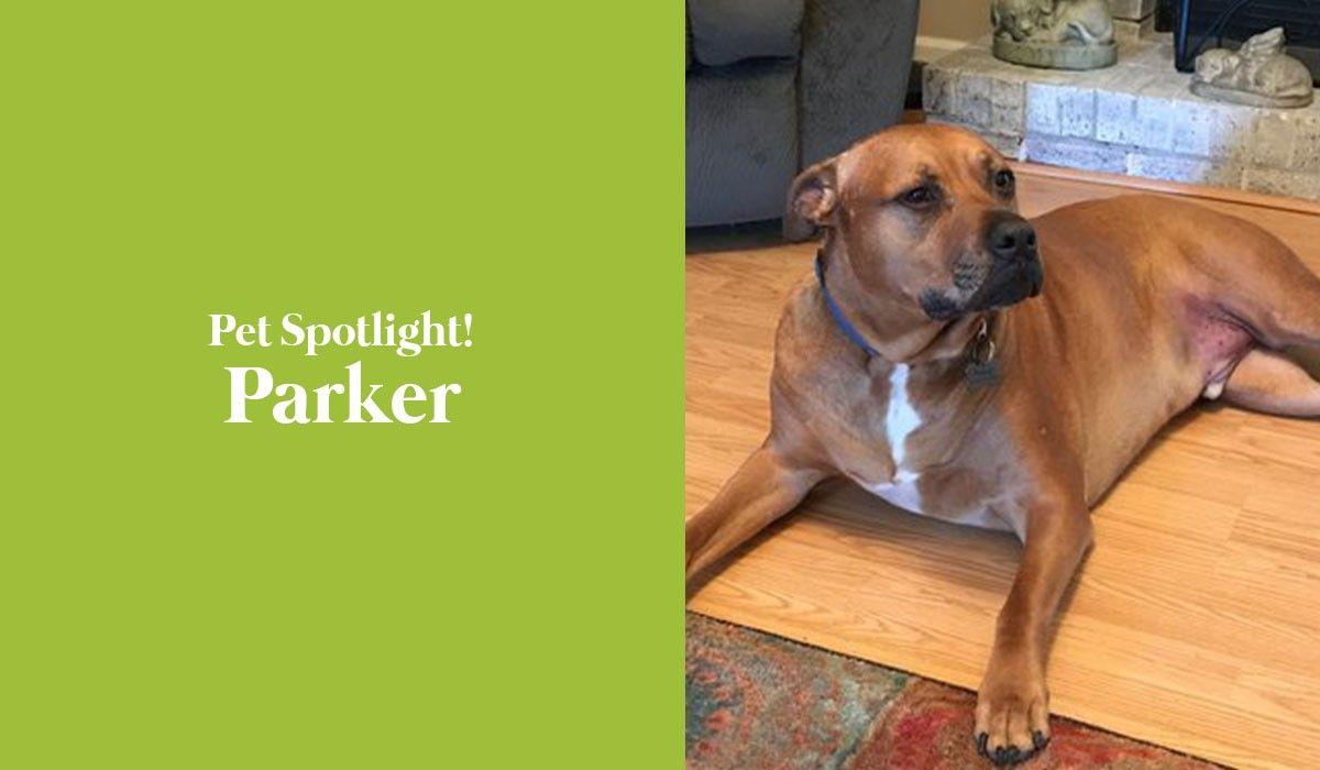 pet-spotlight-parker