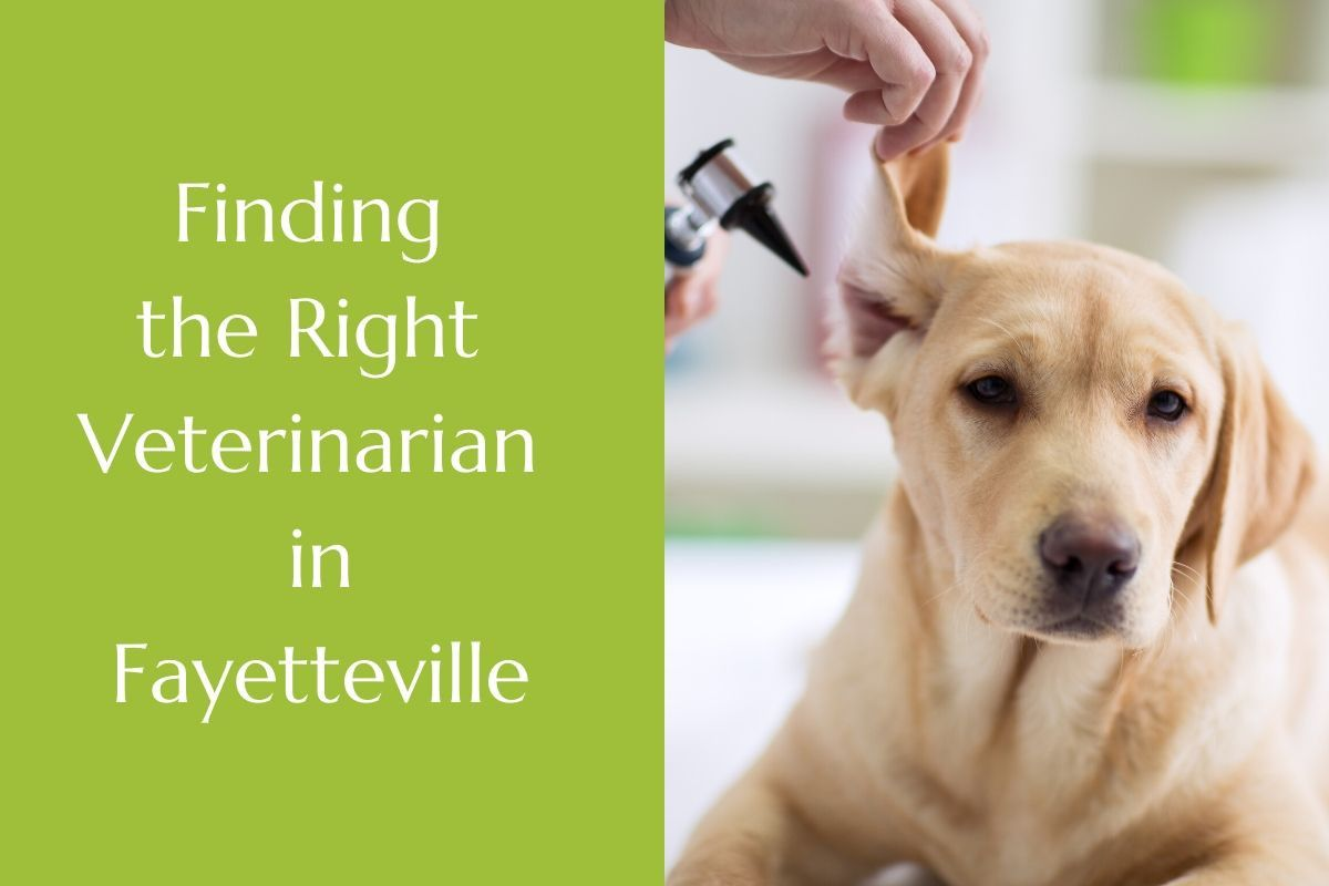 Finding-the-Right-Veterinarian-in-Fayetteville